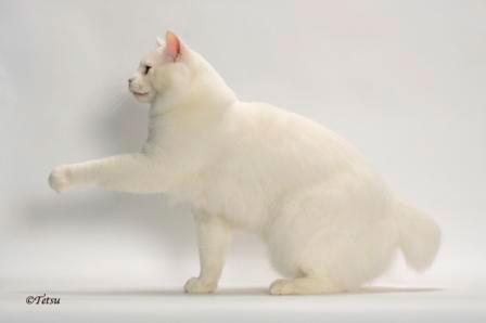 GCBWNW A Bebop Tail Yeti of NuDawnz b